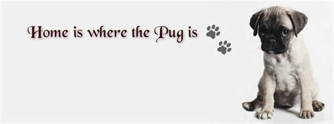 quotes on pugs best 25 pug quotes ideas on pugs pug puppies and pugs