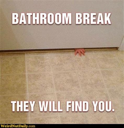 Cat Bathroom Door Meme Pictures Weirdnutdaily They Will Find You