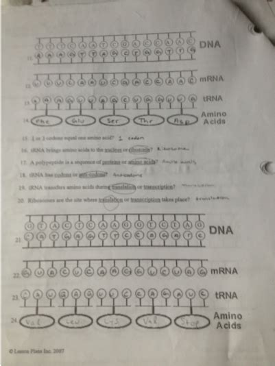 Protein Synthesis Worksheet Answer Key by Enzymes Dna And Protein Synthesis Matt Boward S Aice