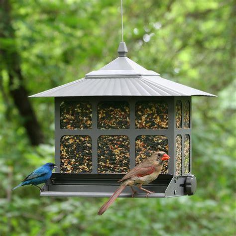 pet squirrel be ii bird