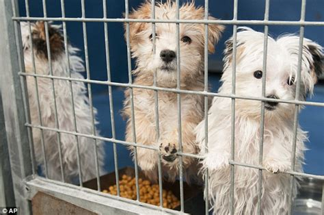 puppy pet shop serial convict conspired to burn pet shop with 27 puppies locked inside