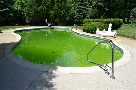 pool images home sydneys best pool service