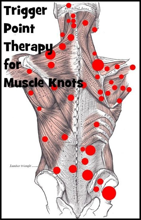 Does Massaging Your Muscles Help Detox by Best 25 Knots Ideas On Trigger Points