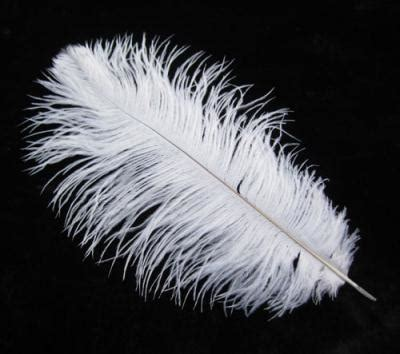 10 12 inch white feather wedding decor direct