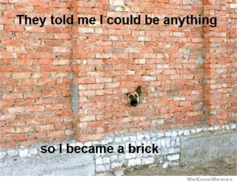 Brick Wall Meme - they told me i could be anything so i became a brick