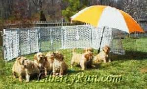 liberty run golden retrievers upcoming litter archives liberty run golden retrievers
