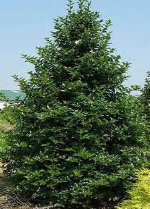 nellie r nellie r tree tlc garden centers