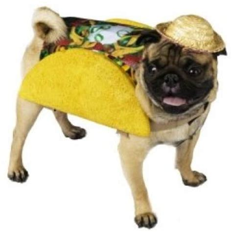 pug runt the best pug costumes known to