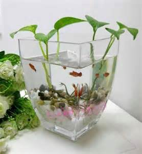 Plants That Grow In Water Vases by Hydroponic Glass Vase Transparent Flower Pot Bottle