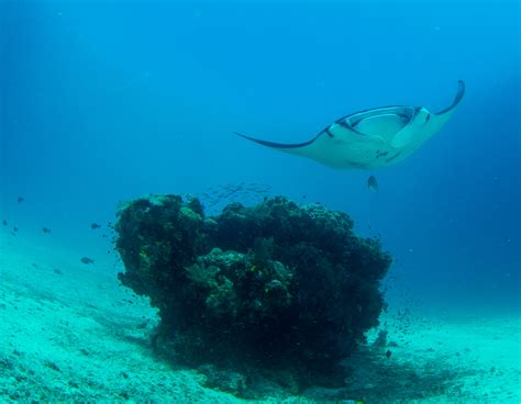 dive vacations best family dive vacations in raja at