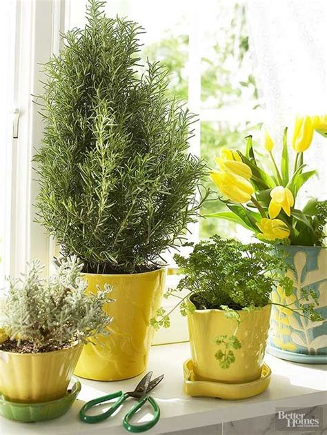 growing herbs 25 b 228 sta growing herbs indoors id 233 erna p 229 pinterest