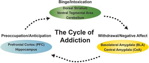 addiction diagram frontiers the addicted brain understanding the