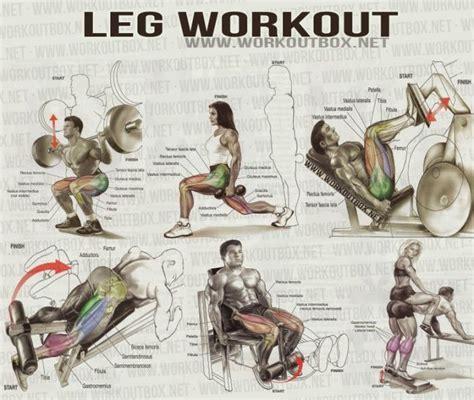 leg workout healthy fitness workout leg calves abs