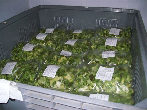 alimenti biologici torino vendita quarta gamma biologica ortaggi verdura torino