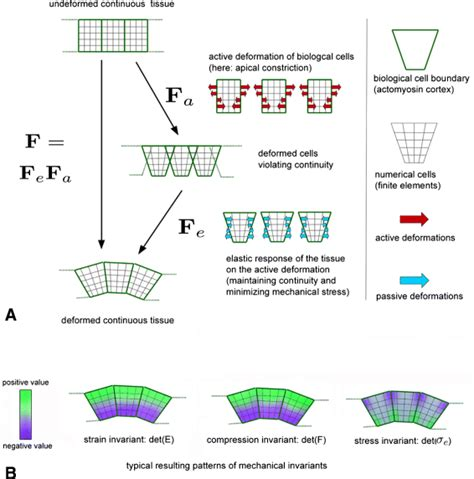 pattern formation turing beyond turing mechanochemical pattern formation in