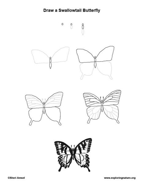 How To Draw Butterfly Butterfly Swallowtail Drawing Lesson Exploring Nature