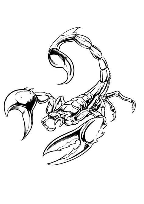 tattoo design vire 177 best images about tattoo ideas on pinterest scorpio