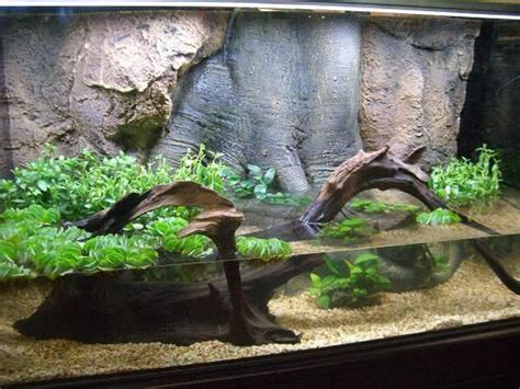 aquascape online pinterest the world s catalog of ideas