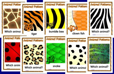 patterns in nature the analysis of species co occurrences animal patterns posters sb1726 sparklebox