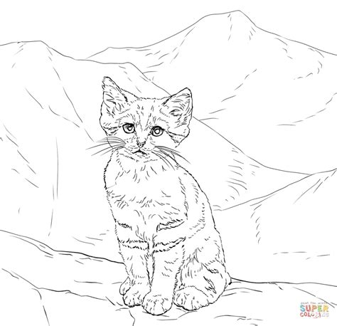 coloring pages of tabby cats realistic tabby cat coloring pages www imgkid com the