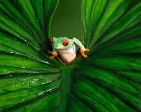 frog from colors frogs with beautiful colors pictures