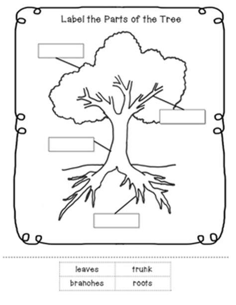 evergreen tree tracing cutting enchantedlearning parts of a tree worksheet by learning tpt