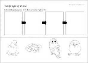 owl life cycle cut and stick activity sb8750 sparklebox