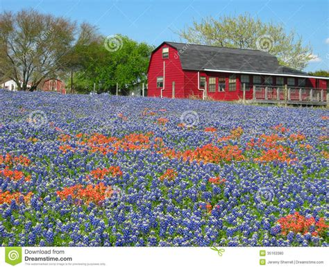 texas red house wildflowers and red house stock photo image 35163380
