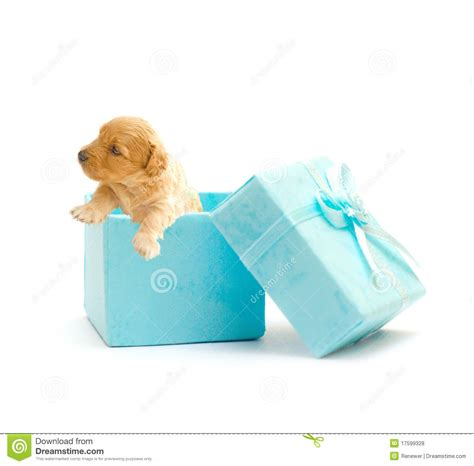puppy in a box puppy in a blue gift box royalty free stock photos image 17599328