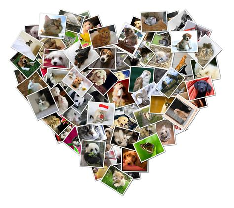 photo montage shape collage gallery