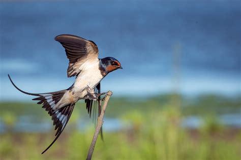 free photo bird animal wildlife flight free image on