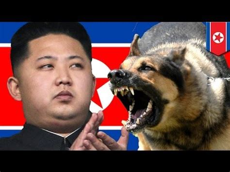 un dogs jong un orders to be fed to dogs