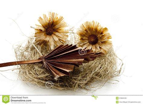 imagenes flores secas flores secas da flor no feno imagens de stock royalty free