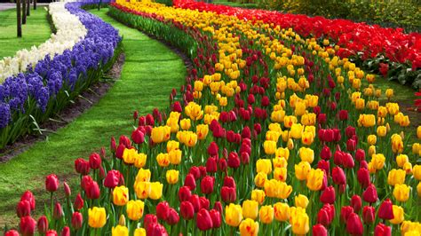 Image Of Flower Garden Tulip Flower Garden Free Stock Photo Domain Pictures