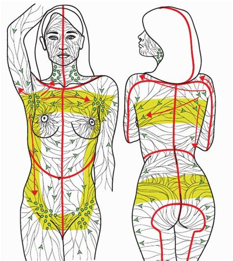Lymph System Detox by Best 25 Lymphatic System Ideas On Detox