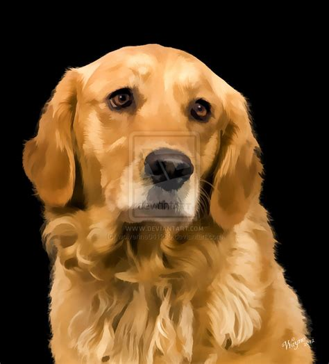 want to buy golden retriever puppy golden retriever by wolverine041269 on deviantart