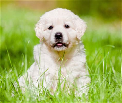 caring for puppies puppy care basics how to care for a new puppy caring for a new puppy