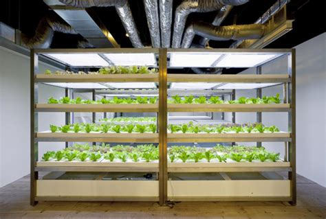 indoor underground urban farms  growing