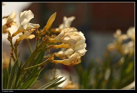 imagenes de flores marchitas flores marchitas 171 depoetasylocos