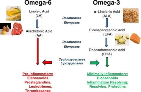 alimenti omega 6 dietary sources and general metabolic pathway for omega