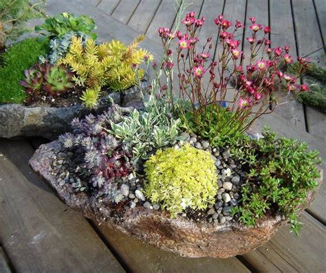 77 Best Troughs Images On Pinterest Garden Ideas Yard Rock Garden With Potted Plants