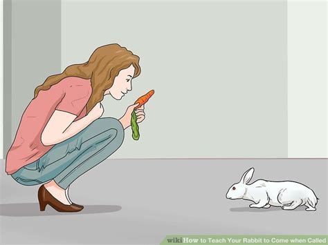 how can i my to come when called how to teach your rabbit to come when called 11 steps