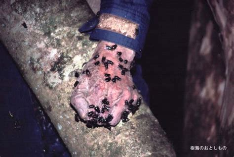 imagenes suicidas reales el bosque de los suicidios la casa del terror