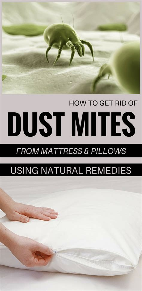 how to get rid of dust mites in bed how to get rid of dust mites from mattress and pillows
