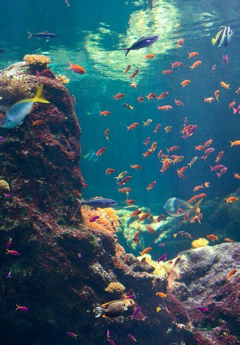 underwater wallpaper tumblr underwater photography images underwater wallpaper and