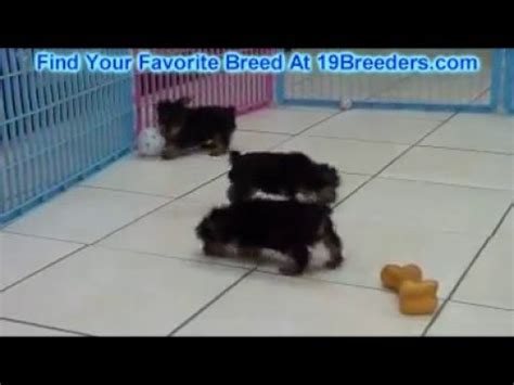 puppies for sale in albany ga terrier funnydog tv