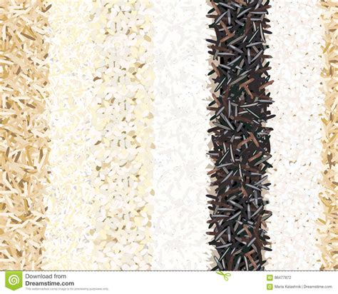 brown rice pattern different types of rice seamless pattern basmati wild