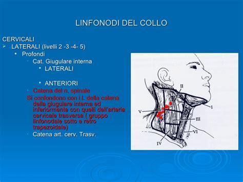 linfonodi testa collo linfonodi della testa