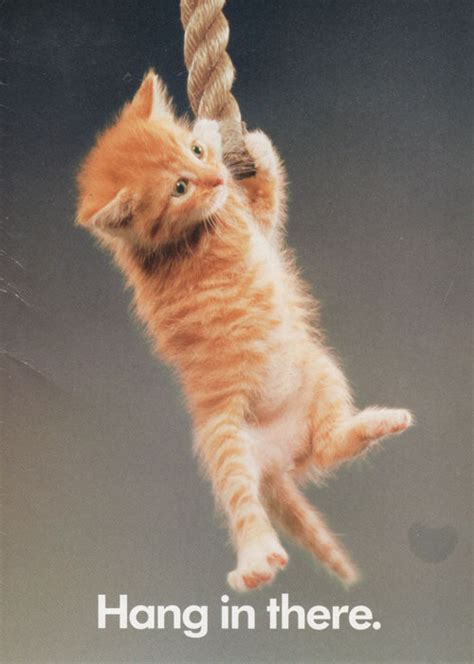 Friday Hanging Up by It S Friday Hang In There Classic Cat Meme Nostalgia