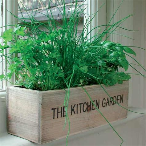 kitchen herb garden kit growing gifts sale fast delivery greenfingers com